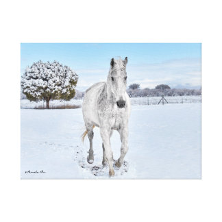 White Horse in Snow mounted on canvas