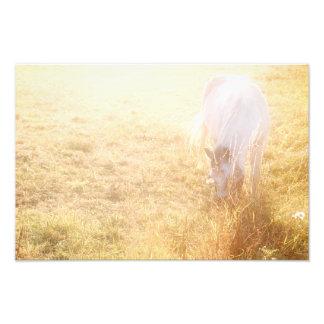 White horse photo print