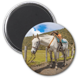 White Horse Tied Up at Cotopaxi National Park 2 Inch Round Magnet