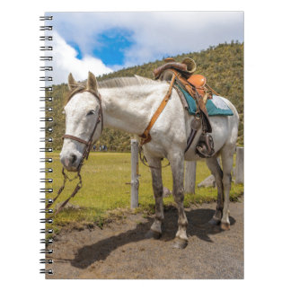 White Horse Tied Up at Cotopaxi National Park Notebook