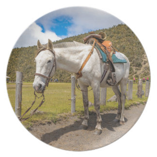 White Horse Tied Up at Cotopaxi National Park Plate