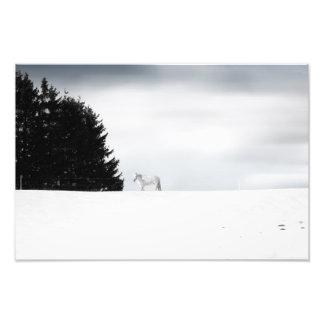 White horses photo print