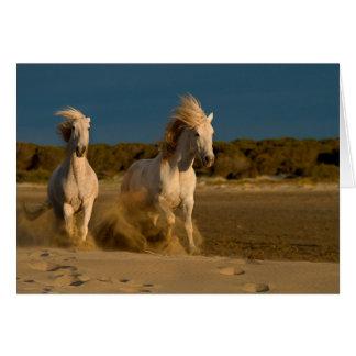 White Horses Running On Beach   Camargue, France Card