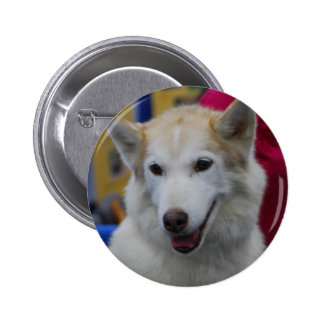 White Husky Button