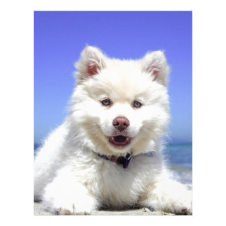 White Husky Puppy with Blue Eyes Letterhead