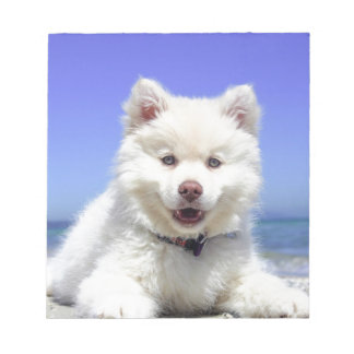 White Husky Puppy with Blue Eyes Notepad