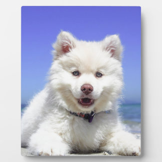White Husky Puppy with Blue Eyes Plaque