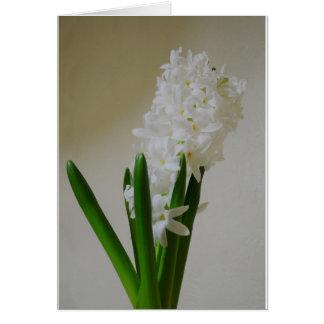 White Hyacinth. Card