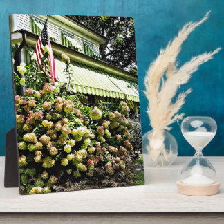 White Hydrangeas By Green Striped Awning Plaque