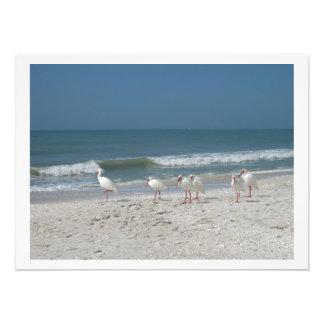 White Ibis on Pink Sandy Beach Photo Print