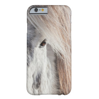 White Icelandic Horse face, Iceland Barely There iPhone 6 Case