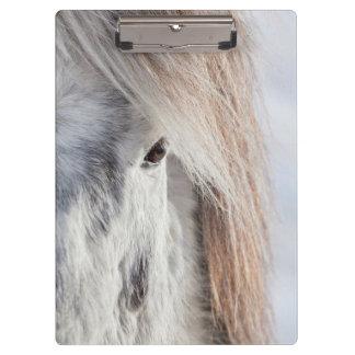 White Icelandic Horse face, Iceland Clipboard
