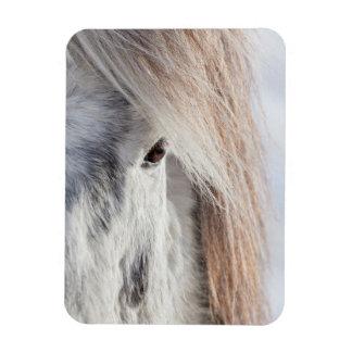 White Icelandic Horse face, Iceland Rectangular Photo Magnet