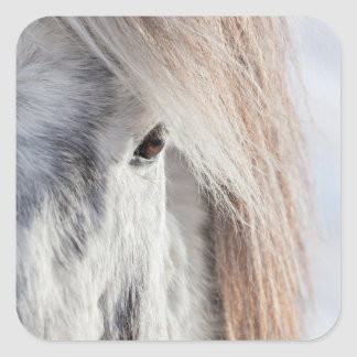 White Icelandic Horse face, Iceland Square Sticker