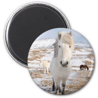White Icelandic Horse, Iceland 2 Inch Round Magnet