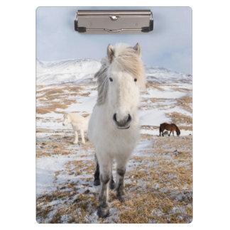 White Icelandic Horse, Iceland Clipboard