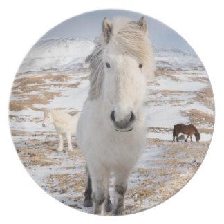 White Icelandic Horse, Iceland Plate