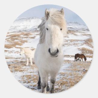 White Icelandic Horse, Iceland Round Sticker