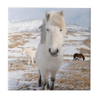 White Icelandic Horse, Iceland Tile