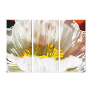 White Icelandic Poppy Triptych Wall Art Gallery Wrapped Canvas