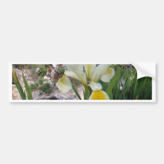 White Iris and Beetle Bumper Stickers
