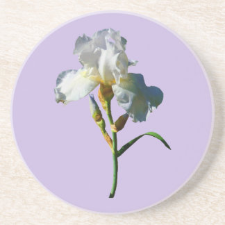 White Iris in Sunshine Coaster