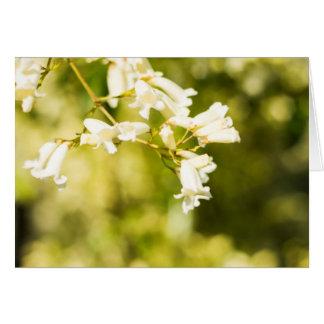 White Jasmine Flower Print Card