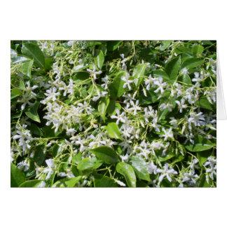 White Jasmine Flowers Greeting Card