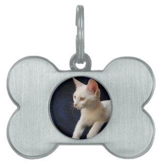 White Kitten Pet Tag