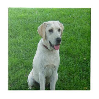 white labrador dog Waiting for love Ceramic Tiles