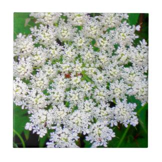 White Lace Hydrangea Tile