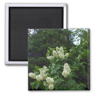 White Lilac Bush and Pine Trees Magnet
