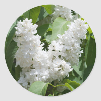 white lilics classic round sticker