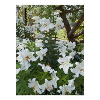 White Lilies Floral Poster