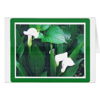 WHITE LILLIES  CARD