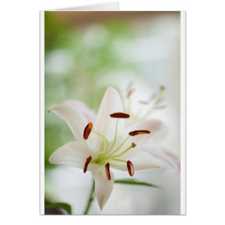 White Lily Flower Fully Open Card
