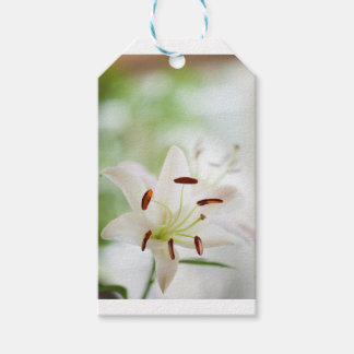 White Lily Flower Fully Open Pack Of Gift Tags