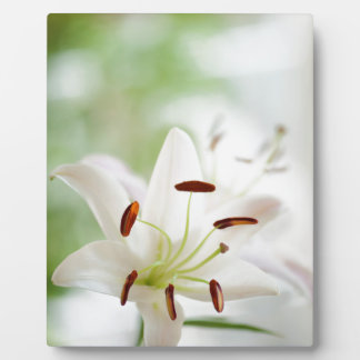 White Lily Flower Fully Open Plaque