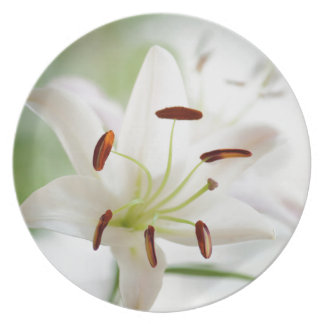 White Lily Flower Fully Open Plate
