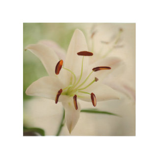 White Lily Flower Fully Open Wood Print