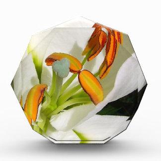 White Lily Photo Block