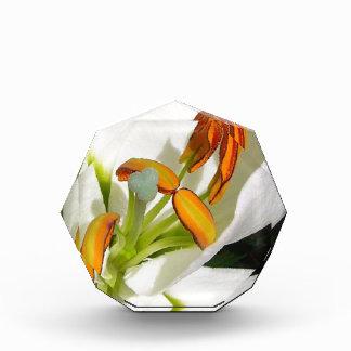 White Lily Photo Block Acrylic