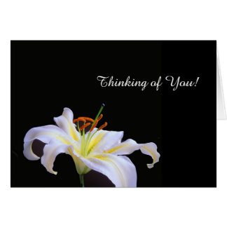 White Lilys image for Greeting card