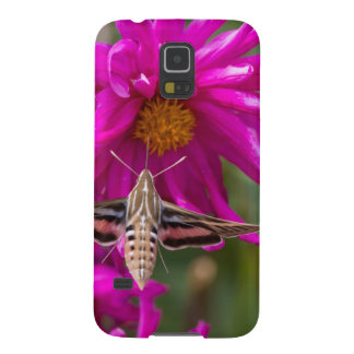 White-lined sphinx moth feeds on flower nectar 2 galaxy s5 case