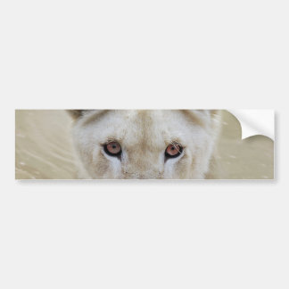 White Lion Spirit Warrior Africa Bumper Sticker