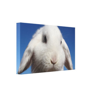 White Lop Canvas Print