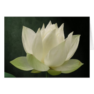 White Lotus Blossom Floral Notecard
