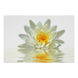 white lotus floating in water poster
