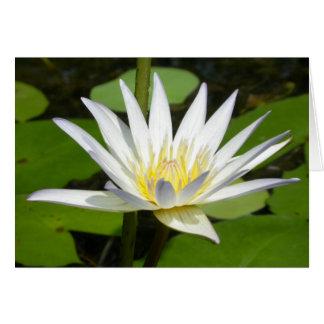 White Lotus Flower Card