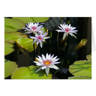 White Lotus Waterlilies Card